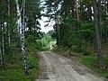 WILCZE ŁUGI wiosna 29 - panoramio.jpg
