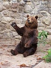 WPKiW - ZOO - Niedźwiedź Brunatny.JPG