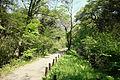 Walkway - Institute for Nature Study, Tokyo - DSC02151.JPG