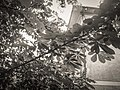 Warm Gray Hue II - panoramio.jpg