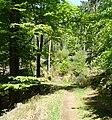 Weg zum Ungeheuersee - panoramio.jpg