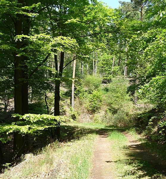 File:Weg zum Ungeheuersee - panoramio.jpg