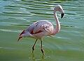 Westfalenpark-100821-17767-Flamingo.jpg
