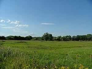 Szigetköz - Wet meadow in Szigetköz