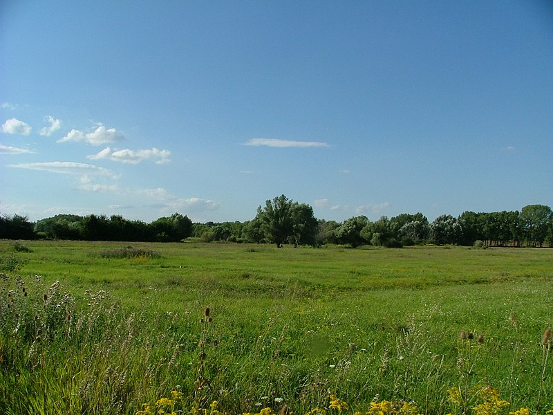 Datei:Wet meadow in Szigetkoz, Hungary.jpg