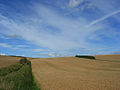 Wheat on the Lambourn Downs - geograph.org.uk - 918272.jpg