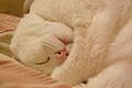White Cat Sleeping.JPG