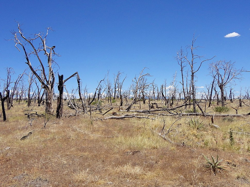 Wildfire damage at Mesa Verde by RO