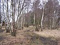 Woodland at Emer Bog - geograph.org.uk - 150418.jpg