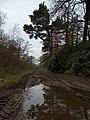 Woodland bridleway, Houghton Moor - geograph.org.uk - 1183731.jpg