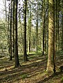 Woods by the River Doon - geograph.org.uk - 365255.jpg