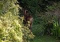 Wraxall 2012 MMB 40.jpg