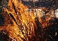 Wraxall 2013 MMB 89 Bonfire.jpg