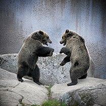 Wrestling bears.JPG