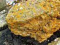 Yellow Lichen on Serpentine rock - Flickr - brewbooks.jpg