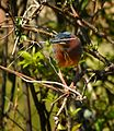 Yep. The Green Heron Again -) - Flickr - Andrea Westmoreland.jpg