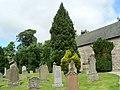 Yews, not Douglas firs - geograph.org.uk - 886103.jpg