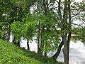 Zarasai, Lithuania - panoramio (466).jpg