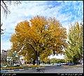 (((نمایی از میدان شهرداری مراغه در پاییز ))) - panoramio.jpg