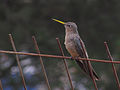 ? bird (10827286313).jpg