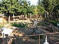 Állatkert (zoo) - panoramio (2).jpg