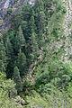 Árbores. Les Pardines. Andorra 246.jpg