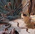 Çamlıdere Doğa ve Hayvan Müzesi.jpg
