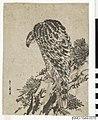 Örn sittande på en tallgren (NMG-1944-0076).jpg