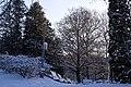 Ботанічний сад ім. акад. Фоміна P1320841.jpg