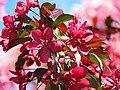 Весна в парку Аскольдова могила IMG 8712.jpg