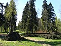 Дворцовый парк Гатчины-Palace Park in Gatchina - panoramio (8).jpg