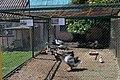 Кам'янець-Подільський зоопарк IMG 8816 13.jpg