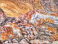 Каменюки поросли - panoramio.jpg