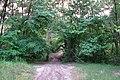 Непран Вячеслав, Вільшаник, Заповідне урочище, 44-129-5001, 49° 0′ 33″ N, 38° 29′ 16″ E(1).jpg