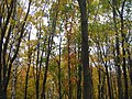 Осень - panoramio - васильки.jpg
