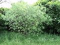 Парк шума Гази Баба во мај (52).JPG