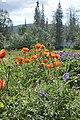 Полярно-альпийский Ботанический сад-институт им. Аврорина июль 2016.jpg