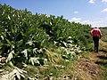 Природний заповідник «Єланецький степ» в травні.jpg