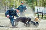Собаки НГУ 4298 (19358760621).jpg