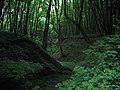 Сутінки в лісі.Яр Маланчин потік.jpg