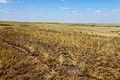 Типичный степной ландшафт - panoramio.jpg