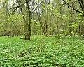 Фото путешествия по Беларуси 060.jpg