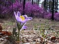 Цветок из заповедника Сырдык.jpg