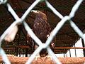 Якутский зоопарк 09.JPG