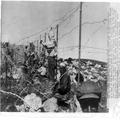 המאורעות בארץ ישראל 1938 - גבול סורי לבנוני עבודות תיקון חומת טגארט-PHL-1088140.png