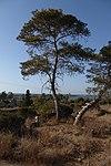 מבצר עתלית - אתרי מורשת במישור החוף 2016 (43).jpg