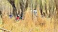 از میان گندم زار دوستان معلومند - panoramio.jpg