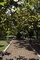 باغ ارم شیراز ایران-Eram Garden shiraz iran 03.jpg