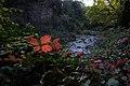 گیاهان در پاییز - باغ بوتانیکال تفلیس 16.jpg