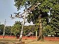 ঢাকা বিশ্ববিদ্যালয়ের টিএসসির সামনে অবস্থিত ভাস্কর্য শান্তির পায়রা.jpg
